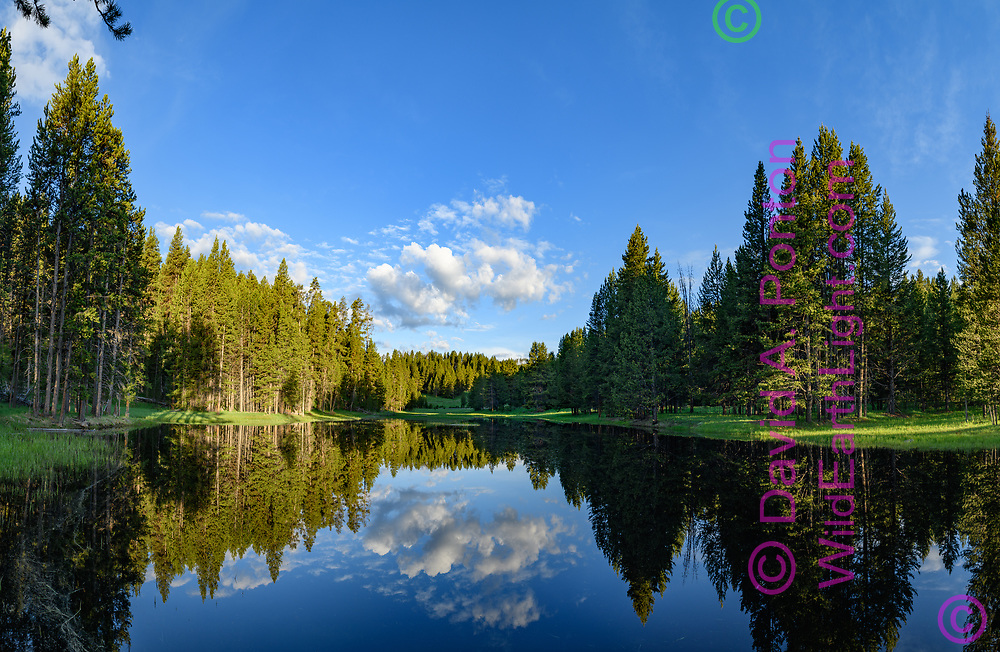 Otter Creek reflects forest and sky, Yellowstone National Park, WY, © David A. Ponton (Large file suitable for big prints)