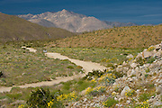 vehicle traveling a dirt road in the spring in the Anza Borrego state park in California