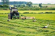 Łąki nad Biebrzą, okolice Suchowoli, Polska<br /> Meadows over Biebrza, near Suchowola, Poland