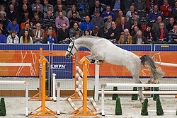 101 - Casago<br /> KWPN Stallion Selection - 's Hertogenbosch 2014<br /> © Dirk Caremans