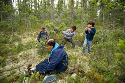 Women from the Dene' Band  collect blueberries in their village of Lutsel Ke' (aka Snowdrift) July 20, 2011. This huge reach of untrammeled country is partially the result of the creation of the Thelon Wildlife Sanctuary. Located equidistant from Hudson Bay and Great Slave Lake, the region now encompassed by the sanctuary was never permanently settled. The closure had far-reaching effects on all the wildlife.  In addition, mineral exploration was kept out of the sanctuary. There are few places left on the planet as untouched as this.