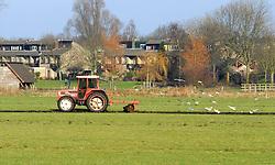veeteelt, cattle breeding akkers, fields, agriculture