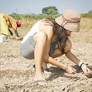 Peace Corps volunteer Rachael Honick helps collect the peanuts that got away during harvesting. Koumbadiouma, Kolda, Senegal.