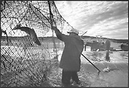 Salmon netters emptying a 'jumper' net at low tide on the sands at Kinnaber, Angus.<br /> Ref. Catching the Tide 48/00/29 (1st August 2000)<br /> <br /> The once-thriving Scottish salmon netting industry fell into decline in the 1970s and 1980s when the numbers of fish caught reduced due to environmental and economic reasons. In 2016, a three-year ban was imposed by the Scottish Government on the advice of scientists to try to boost dwindling stocks which anglers and conservationists blamed on netsmen.