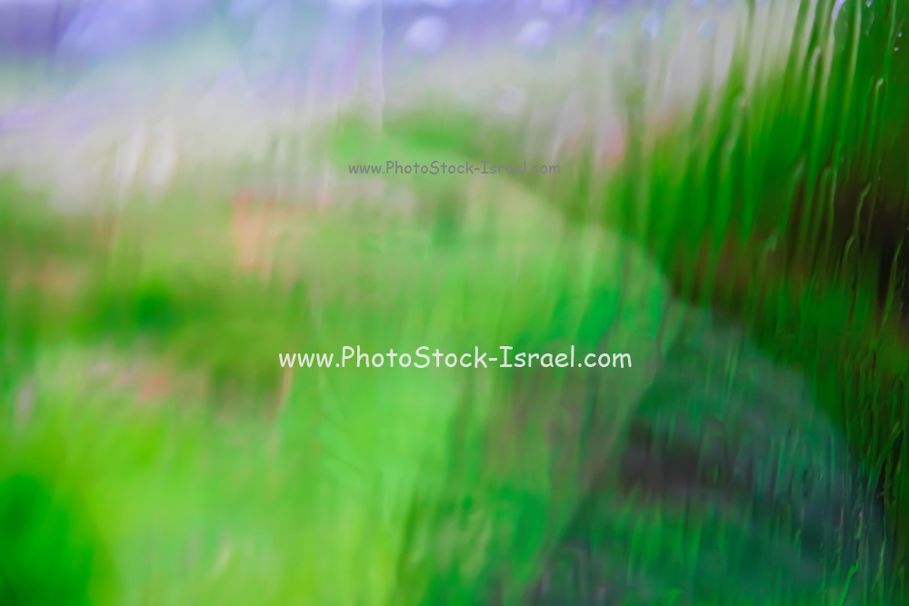 Motion blured green landscape abstract