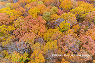 63876-02410 Aerial view of fall color trees Stephen A. Forbes State Park Marion Co. IL