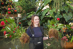 © Licensed to London News Pictures. 02/02/2012. London, England.  Royal Botanic Gardens at Kew celebrate the Tropical Extravaganza Festival 2012 with more than 6,500 tropical plants. The festival runs from 4 February to 4 March 2012. In this picture: Kirsty Watson, Kew Trainee. Photo credit: Bettina Strenske/LNP