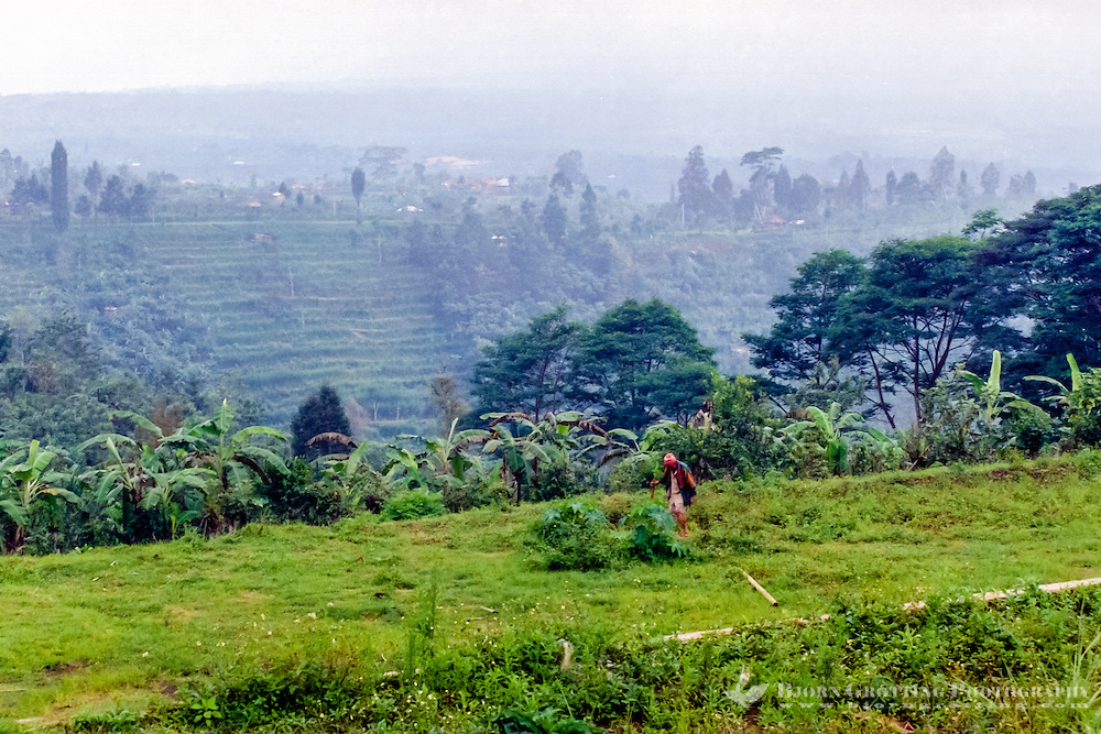 Bali, Bangli, Kintaman. Rice fields. Even the steepest terrain has been cultivated, northern part of Kintamani.