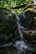 Small stream in forest, West Kootenays, British Columbia, Canada