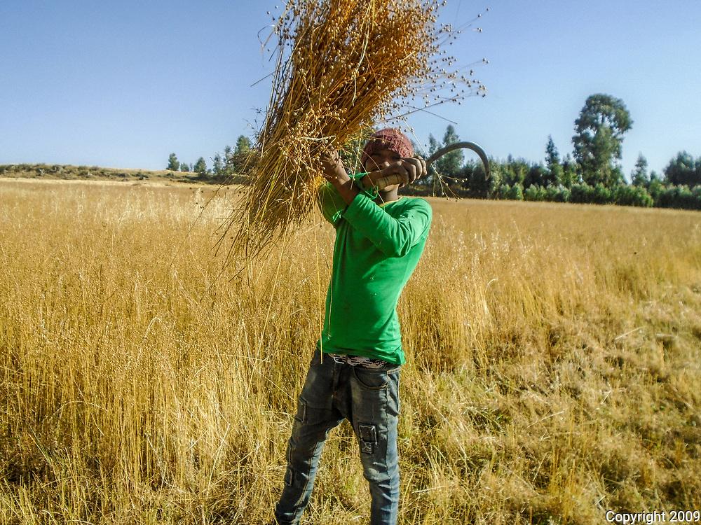 Harvest by Deretu Lama