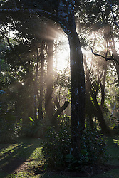 Sunlight breaking through trees in forest, Costa Rica