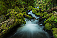 intimate landscape scene along Gorton Creek, Columbi River Gorge, Oregon