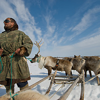 North of the Arctic Circle in Russia, Piotr Terentév, a nomadic Komi reindeer herder, surveys the vast, frozen tundra as his reindeer rest from wallowing through deep, wet spring snow.