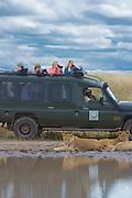 Safari visitors photograph lion pride at close range, Serengeti National Park, Tanzania