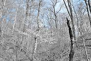 California Woods