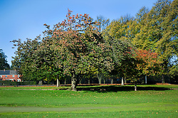 Leaves of trees turn from green to  autumnal red and gold in Ecclesfield park Sheffield 20th October 2010 .Images © Paul David Drabble