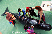 animal care staff at Miami Seaquarium and baby sperm whale, Physeter macrocephalus, brought for rehabilitation after stranding, Miami, Florida, USA