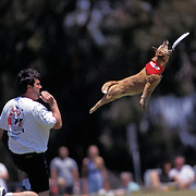 The Canine Frisbee Disc Championship held in San Diego.