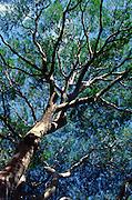 Earpod tree<br />