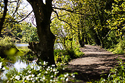 Walking paths running alongside a stream and reservoir of water in the woods in St Catherine's, Jersey, Channel Islands