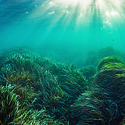 Celebrating Seagrass