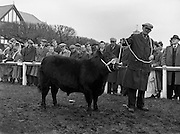 05/02/1957<br /> 02/05/1957<br /> 05 February 1957<br /> R.D.S. Bull show first day, in Ballsbridge, Dublin. A prize winning bull shown off in front of the crowd.