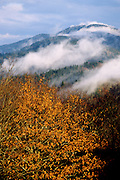 Fall leaves and fog on a cool morning - Shenandoah N.P., Virginia