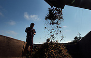 Mauricio Dominguez moniters chardonnay grape pomice, the waste from the grapes after they're crushed inside a grape-crushing machine and the juice has been extracted, at the Iron Horse Vineyards in Sebastopol, Calif. on Saturday Sept. 27, 2003. (Photo by Jakub Mosur)
