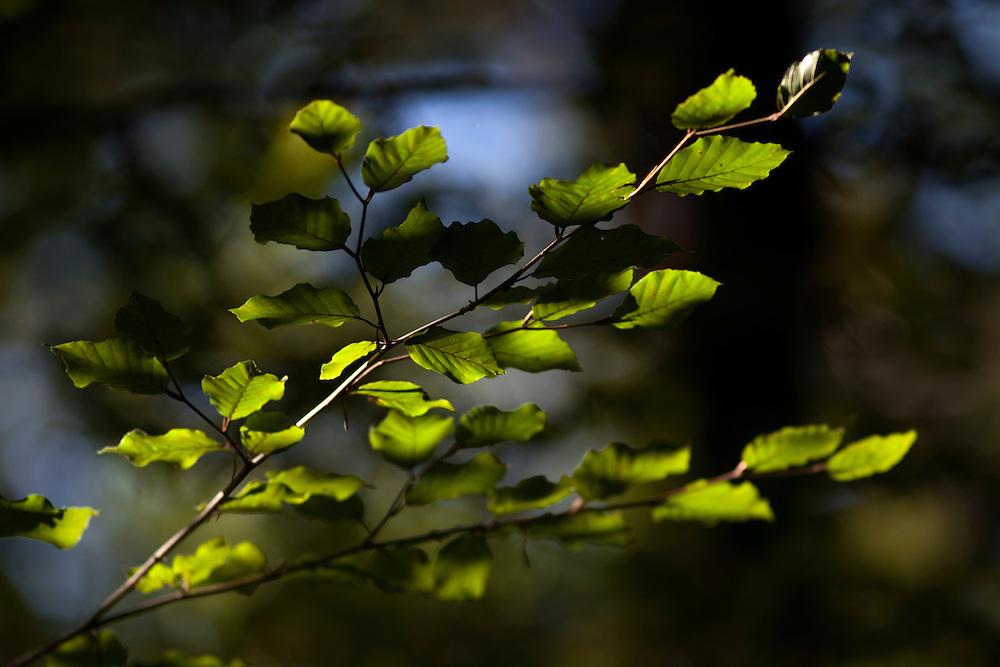 Leaf branch in sunlight
