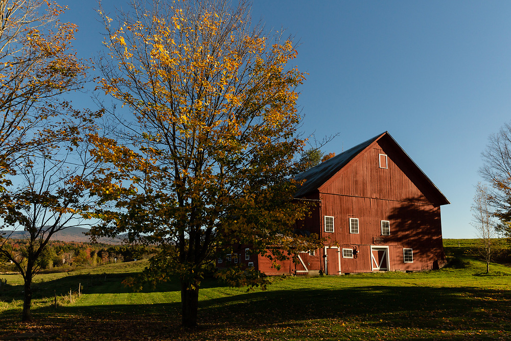The Spear Barn in Stowe, VT shining in the autumn glow.