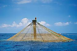 workers feeding Kona Kampachi, Hawaiian yellowtail, aka almaco jack or kahala, Seriola rivoliana, in  3,000-cubic-meter submersible pen installed in open ocean just off Kona Coast, Kona Blue Water Farms, Big Island, Hawaii, Pacific Ocean