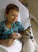 """Oak Creek, Colorado, USA -<br /> Kandu - the little dog that could<br /> <br /> Kandu was born without front legs. His original owners, fearing the Jack Russell terrier would never have a normal life, left him at a local shelter to be euthanized.<br /> <br /> Ken Rogers and his wife, Melissa, were watching the news one night at their home near Steamboat Springs, Colorado when they saw a segment on Kandu which melted their hearts.<br /> <br /> They immediately applied to adopt him - along with 99 other families.<br /> <br /> When Ken and Melissa brought Kandu home, Ken got right to work on a contraption made of molded plastic and rollerblade wheels so Kandu could get around.<br /> <br /> """"Now he can run with the other dogs,"""" says Ken, who even designed a mono-ski for Kandu so he can play in the snow.<br /> <br /> """"He doesn't think he's handicapped,"""" says Ken. """"He's got such spirit.""""<br /> <br /> Meanwhile, Melissa has been visiting nearby Yampa Valley Medical Center with Kandu to lift patients' spirits. When it is time for his """"shift,"""" Kandu runs towards the hospital doors. """"He's pure joy,"""" says Melissa.<br /> <br /> Patients who are struggling to recover from strokes, accidents, serious illness or operations react when they see Kandu scampering around. Perhaps they think """"If Kandu can do it, maybe I can too.""""<br /> <br /> Kandu has been so successful at getting around on just two legs that Ken and Melissa have adopted a playmate for him - Luci - a Chihuahua which was also born without any front legs. <br /> Photo Shows: Kandu is a regular visitor at Yampa Valley Medical Center in Steamboat Springs, Colorado to lift the spirits of patients like this little boy. Patients who are struggling to recover from strokes, accidents, serious illness and operations react when they see Kandu scampering around. Perhaps they think, """"If Kandu can do it, maybe I can too.""""<br /> (Credit Image: © John F. Russell/Exclusivepix)"""