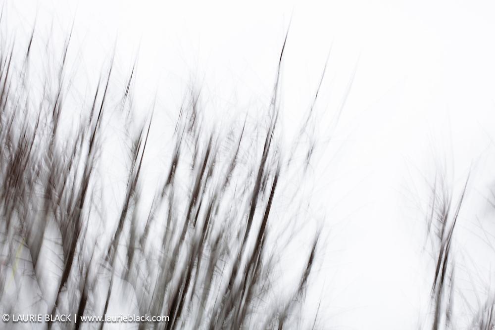 Winter trees in blur