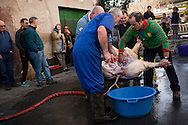 A professional butcher (in blue overalls) and some more men retire intestines of a dead pig  in traditional way pig slaughtering.  Doneztebe (Basque Country). December 08. 2016. The slaughter traditionally takes place in the autum and early winter and the work often is done in the open. (Gari Garaialde / Bostok Photo)