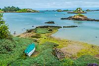 green alga Brehat island in brittany cotes d armor France