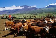 Kaupo ranch, Maui, Hawaii