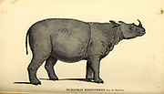 Rhinoceros from General zoology, or, Systematic natural history Part I, by Shaw, George, 1751-1813; Stephens, James Francis, 1792-1853; Heath, Charles, 1785-1848, engraver; Griffith, Mrs., engraver; Chappelow. Copperplate Printed in London in 1800. Probably the artists never saw a live specimen