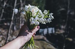 18.03.2020, Kaprun, AUT, tägliches Leben mit dem Coronavirus, im Bild eine Frau hält einen Frühlingsknotenblumen-Strauß in die Luft. Für ganz Österreich wurde eine Ausgangsbeschränkung der Bundesregierung ausgesprochen. //a woman holds up a bouquet of springtime knot flowers. The Austrian government is pursuing aggressive measures in an effort to slow the ongoing spread of the coronavirus, Kaprun, Austria on 2020/03/18. EXPA Pictures © 2020, PhotoCredit: EXPA/ Stefanie Oberhauser