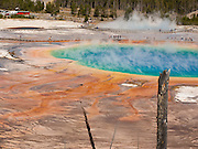 Colorful microbial mats coat terraces of Grand Prismatic Spring in Midway Geyser Basin, Yellowstone National Park, Wyoming, USA. Grand Prismatic is the largest hot spring in the United States, and the third largest in the world, next to those in New Zealand. The sterile blue water in the pool's center is too hot to support life (87 degrees Centigrade or 188 F). Pure water selectively absorbs red wavelengths of visible light, making the center deep blue. But in cooler water along the edges, microbial mats of thermophilic (heat-loving) cyano-bacteria and algae thrive. Yellow, orange, and red pigments are produced by the bacteria as a natural sunscreen. As a result, the pool displays a spectrum of colors from the bright blue water of the center to the orange, red, and brown algal mats along the edges. Summer mats tend to be orange and red, whereas winter mats become dark green. Yellowstone was the first national park in the world (1872), and UNESCO honored it as a World Heritage site in 1978.
