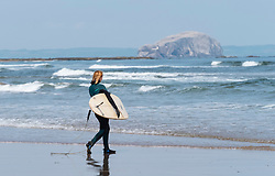 Female surfer carries  surfboards to sea at Belhaven Beach, Bass Rock in distance, East Lothian, Scotland, United Kingdom