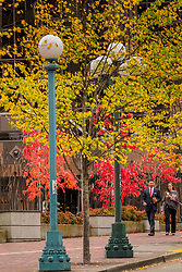 USA, Washington, Bellevue. Autumn leaves downtown.