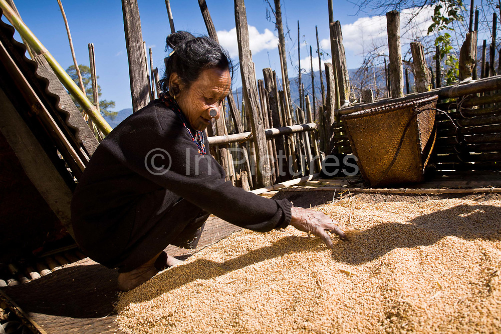 Apatani tribal elder Atta Yadd spreads out to dry recently threshed rice in  her village of Hijja, Arunachal Pradesh. The Apatani tribe are one of hundreds of indigenous tribes scattered across India, particularly the north east. Their origins are from Mongolian nomadic tribes whom settled on the Ziro plateau, close to the Chinese border, they practice fixed agriculture as well as forestry, planting trees on the rim of the plateau as well as bamboo forests from which they derive fire wood, building their homes as well as using the bamboo for all manner of applications in their daily lives, cooking utensils and household containers amongst other uses. They carefully cultivate bamboo forests allowing them to grow, but not flower and die, as this would spell disaster for their very own existence. They also tend to their rice fields and live stock for what is mostly a subsistence economy. The Indian constitution recognizes over 500 indigenous tribes, which account for 8.5% of the total population