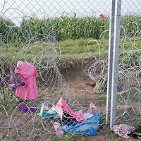 Opening cut on the razor wire fence on the border between Serbia and Hungary near Roszke (about 174 km South of capital city Budapest), Hungary on September 15, 2015. ATTILA VOLGYI