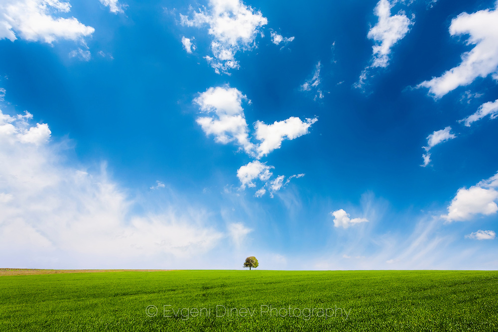 Minimalistic spring landscape