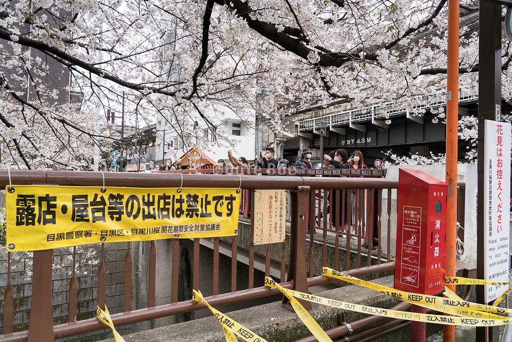 Cherry blossom during the Covid pandemic Tokyo Nakameguro Japan