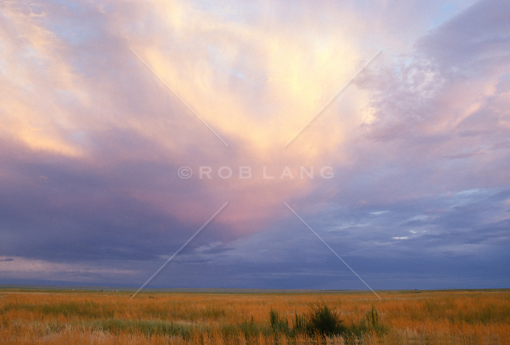 Tall Grass And Cloud Formations On A Summer Day in New Mexico