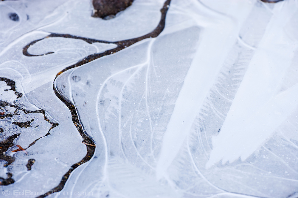 detail of fresh ice on Reflection Lake in Mount Rainier National  Park, WA, USA