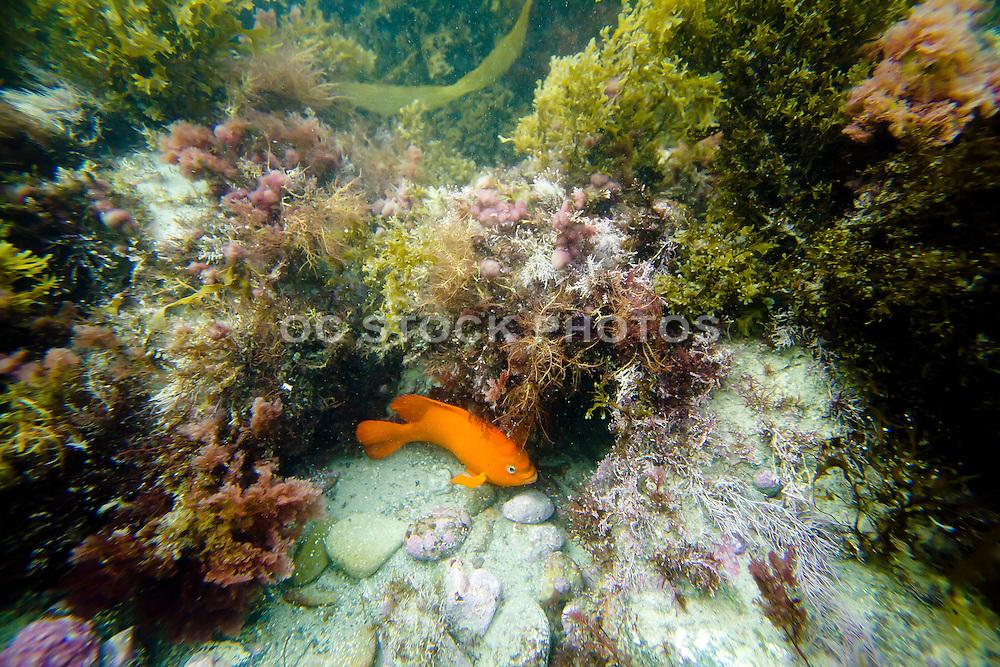 Pacific Ocean Sea Life