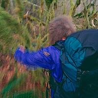 Backpacker Martha Bengen bushwhacks through rain forest near Mount Baker, Washington.