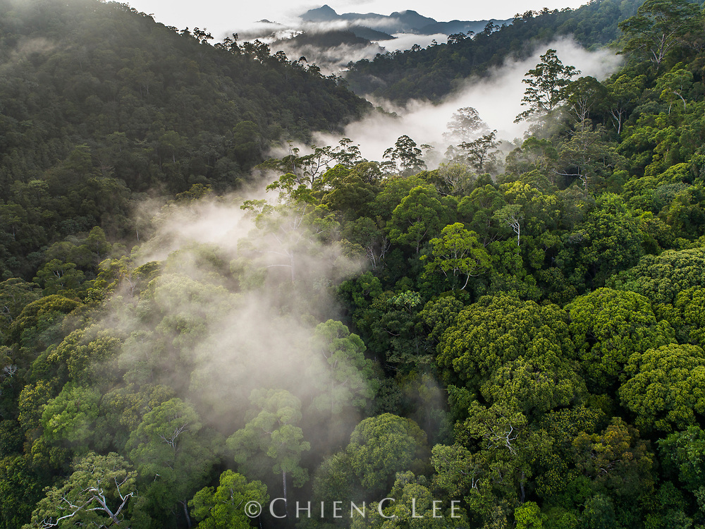 Large stretches of virgin rainforest still remain in the remote interior of eastern Borneo. East Kalimantan, Indonesia.